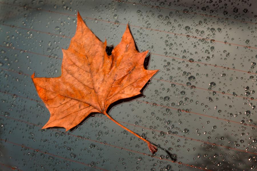 Regen-01