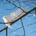 Schnee_001